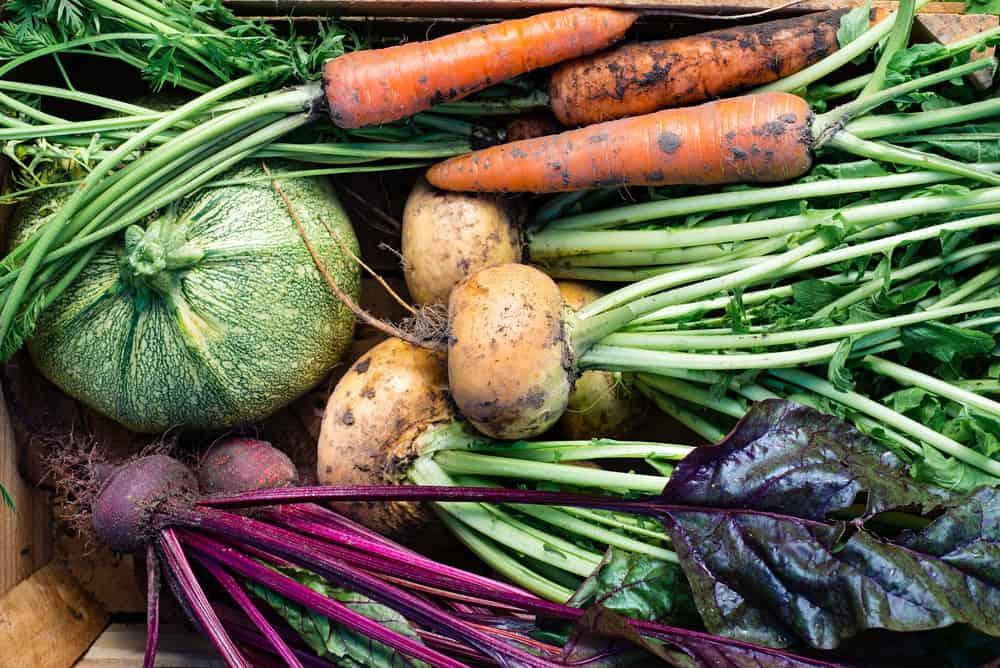 Eating seasonal local food: Fall veggie guide